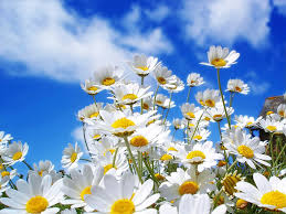 white flowers against a blue and cloudy sky