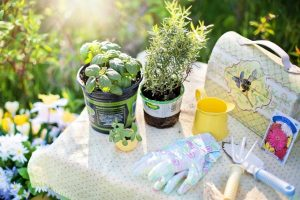 herbs-tools-gardening-gloves