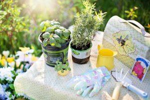 herbs-tools-gardening-gloves