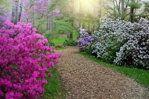 flower-path-outdoors