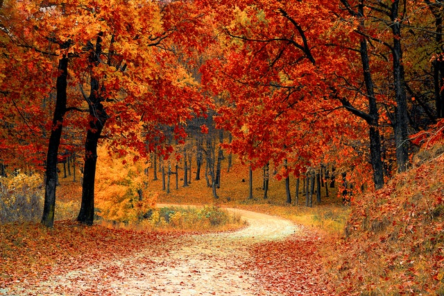 road leading into forest of trees with orange leaves in the fall time