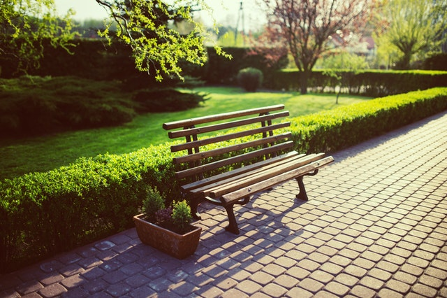 bench in a park with greenery behind and a grass