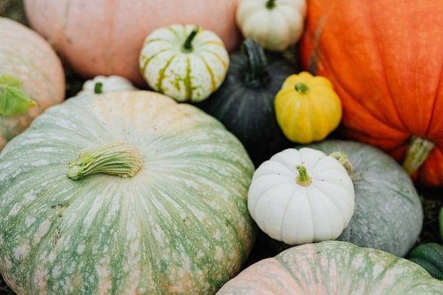 variety of pumpkins on atable